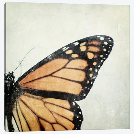 The Monarch Canvas Print #CVA99} by Chelsea Victoria Canvas Artwork