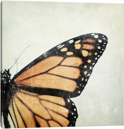 The Monarch Canvas Art Print