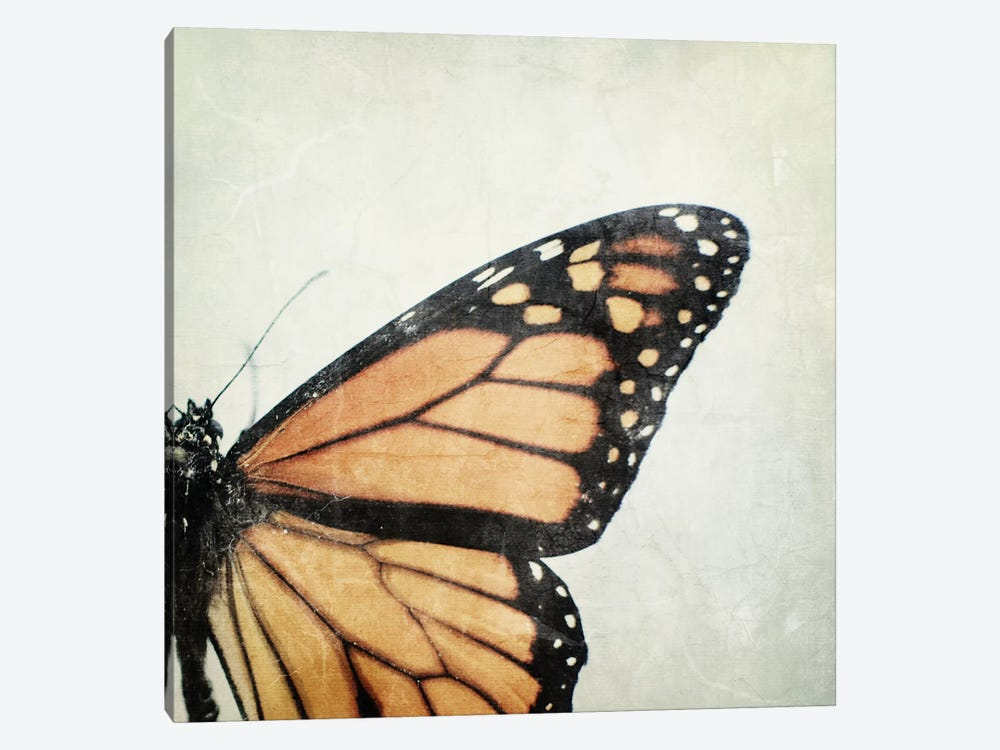 The Monarch by Chelsea Victoria 1-piece Canvas Wall Art