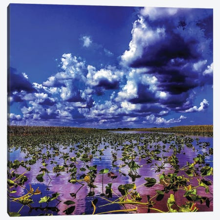 Everglades Canvas Print #CVE12} by Caitlin Vera Canvas Wall Art