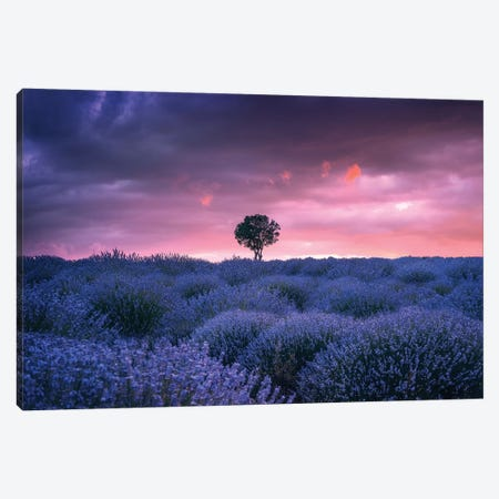 Lavenders - Isparta - Turkey Canvas Print #CVK21} by Cuma Çevik Art Print