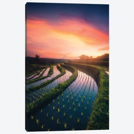 Rice Fields I - Bali - Indonesia Canvas Print #CVK30} by Cuma Çevik Canvas Artwork