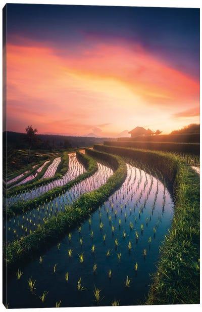 Rice Fields I - Bali - Indonesia Canvas Art Print