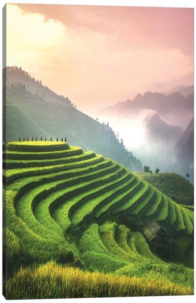 Rice Fields I - North Vietnam Canvas Art Print