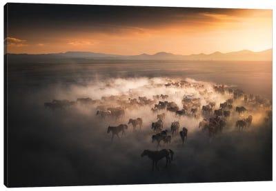 Wild Horses III - Cappadocia - Turkey Canvas Art Print