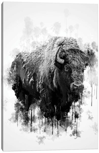 Bison In Black And White Canvas Art Print
