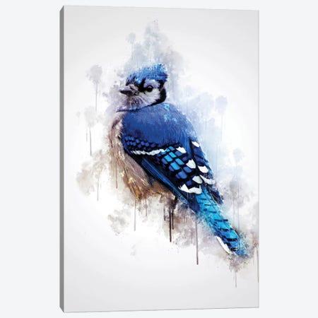 Blue Jay Bird Canvas Print #CVL121} by Cornel Vlad Canvas Artwork