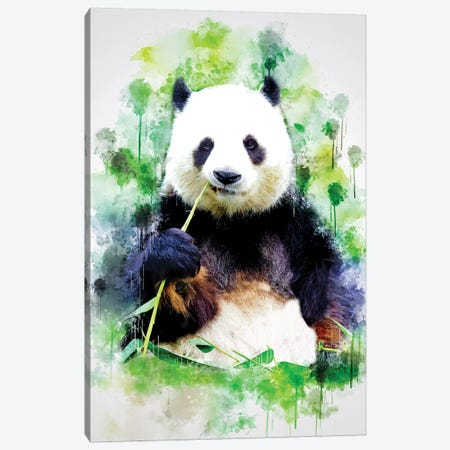 Panda Canvas Print #CVL149} by Cornel Vlad Canvas Wall Art