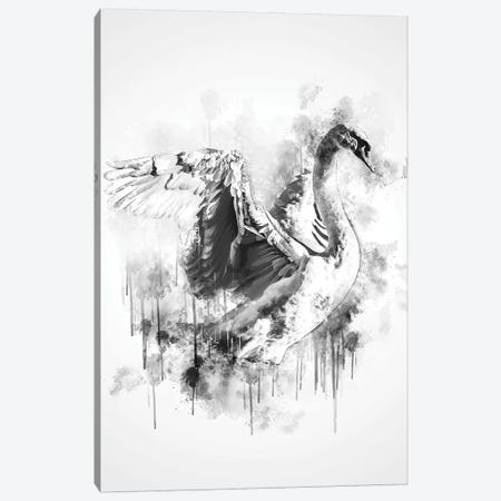 Swan In Black And White Canvas Print #CVL156} by Cornel Vlad Canvas Wall Art