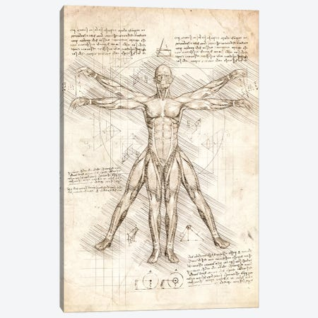 Vitruvian Man Canvas Print #CVL169} by Cornel Vlad Canvas Artwork