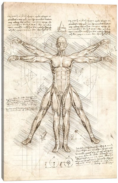 Vitruvian Man Canvas Art Print