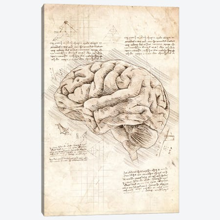 Human Brain Canvas Print #CVL170} by Cornel Vlad Art Print