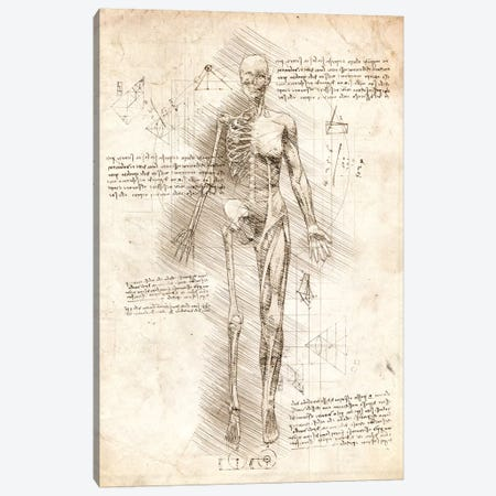 Human Female Half Drawing Canvas Print #CVL172} by Cornel Vlad Canvas Print