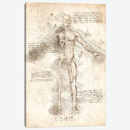 Human Male Half Drawing Canvas Print #CVL173} by Cornel Vlad Canvas Print