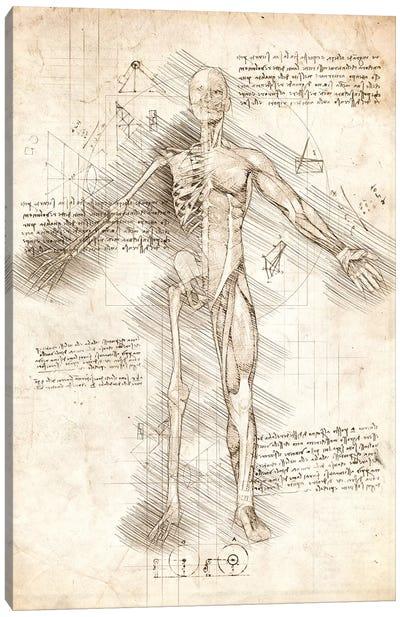Human Male Half Drawing Canvas Art Print