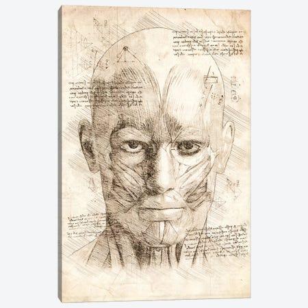 Human Head Face Muscles Canvas Print #CVL189} by Cornel Vlad Canvas Wall Art