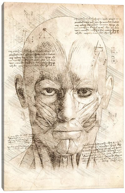 Human Head Face Muscles Canvas Art Print