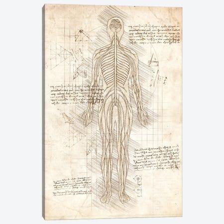 Human Nervous System Canvas Print #CVL190} by Cornel Vlad Canvas Print