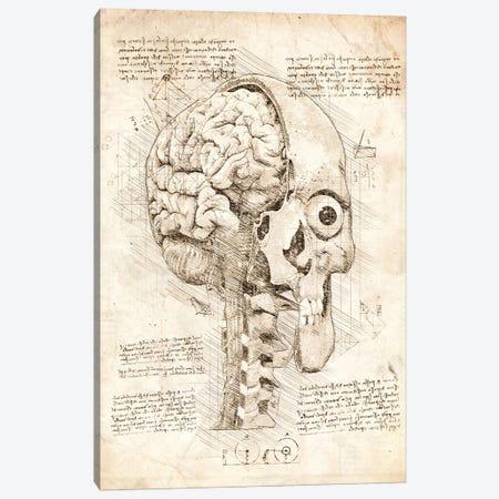 Human Skull Inside View Canvas Print #CVL197} by Cornel Vlad Canvas Wall Art