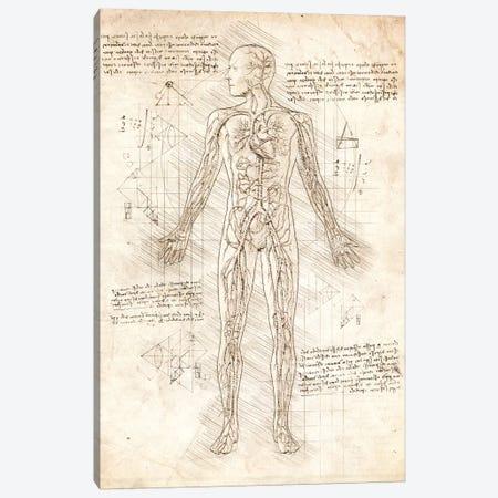 Human Circulatory System Canvas Print #CVL49} by Cornel Vlad Canvas Art