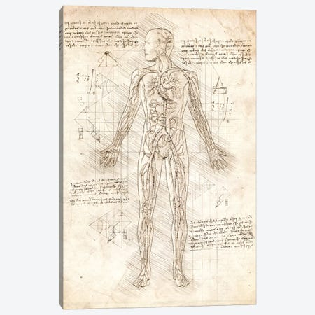 Human Circulatory System Canvas Print #CVL49} by Cornel Vlad Canvas Art