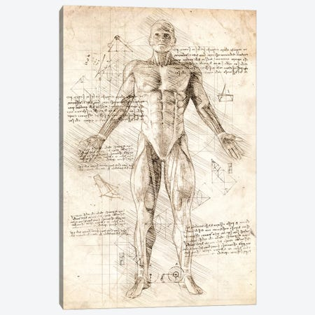 Human Male Muscles Anatomy Canvas Print #CVL51} by Cornel Vlad Canvas Print