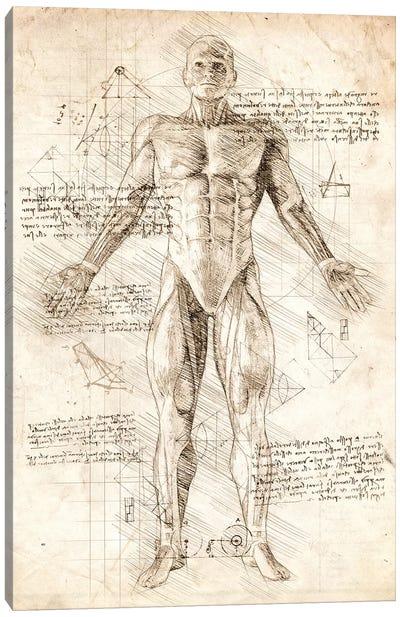 Human Male Muscles Anatomy Canvas Art Print