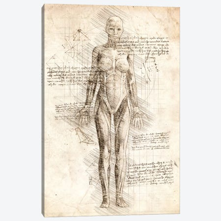 Human Female Muscles Anatomy Canvas Print #CVL52} by Cornel Vlad Canvas Print