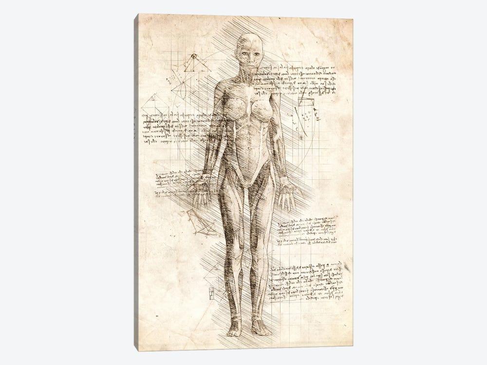Human Female Muscles Anatomy by Cornel Vlad 1-piece Canvas Art
