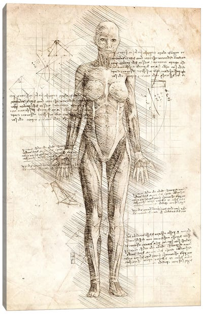 Human Female Muscles Anatomy Canvas Art Print
