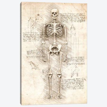 Human Skeleton Canvas Print #CVL89} by Cornel Vlad Canvas Art