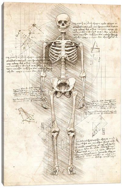Human Skeleton Canvas Art Print