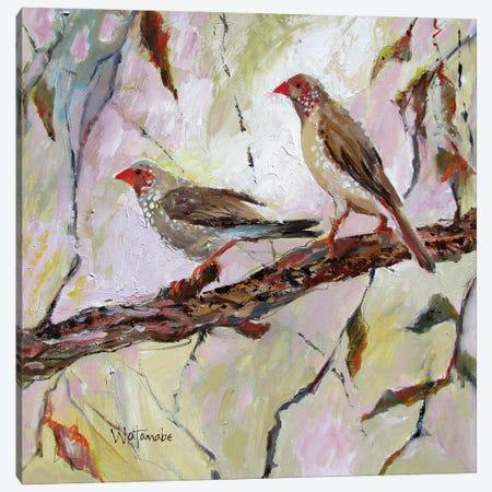 Australian Finches Canvas Print #CWB42} by Carole Rae Watanabe Art Print