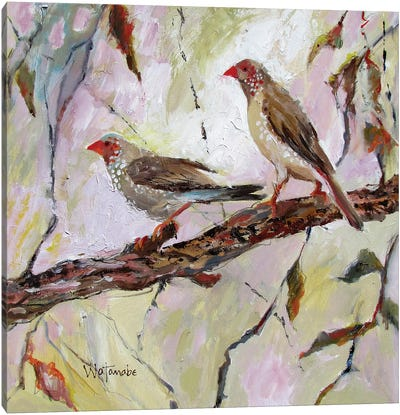 Australian Finches Canvas Art Print