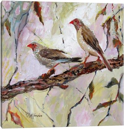 Australian Finches Canvas Art Print