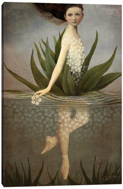 Waterlily Canvas Art Print