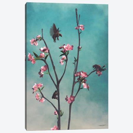 Hummingbears Canvas Print #CYD37} by Cynthia Decker Canvas Artwork