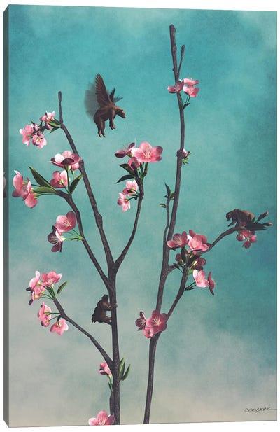 Hummingbears Canvas Art Print