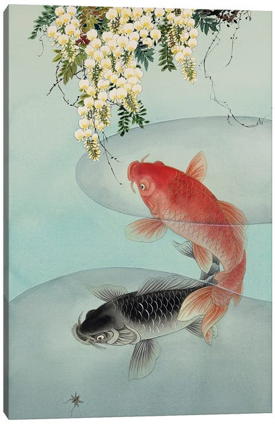 Curious Koi Canvas Art Print
