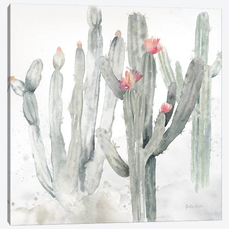 Cactus Garden Gray Blush II Canvas Print #CYN10} by Cynthia Coulter Canvas Art Print