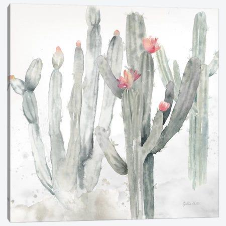 Cactus Garden Gray Blush II Canvas Print #CYN10} by Cynthia Coulter Canvas Art Print