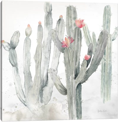Cactus Garden Gray Blush II Canvas Art Print