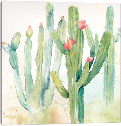 Cactus Garden II Canvas Art Print