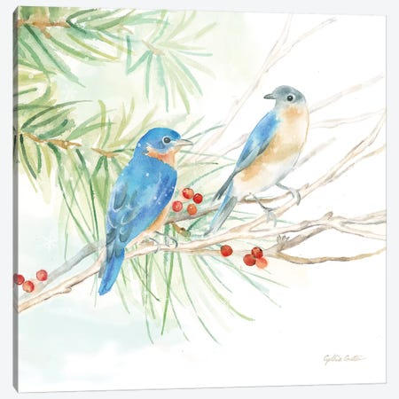 Winter Birds - Bluebirds Canvas Print #CYN147} by Cynthia Coulter Canvas Art Print