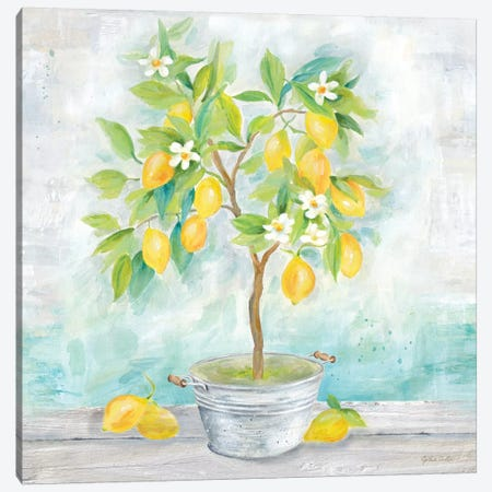 Country Lemon Tree Canvas Print #CYN153} by Cynthia Coulter Canvas Print