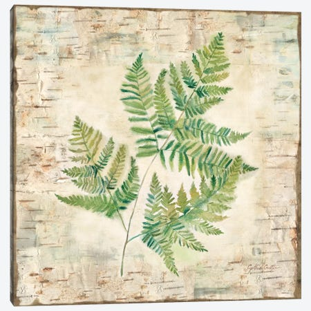Birch Bark Ferns I Canvas Print #CYN3} by Cynthia Coulter Canvas Art