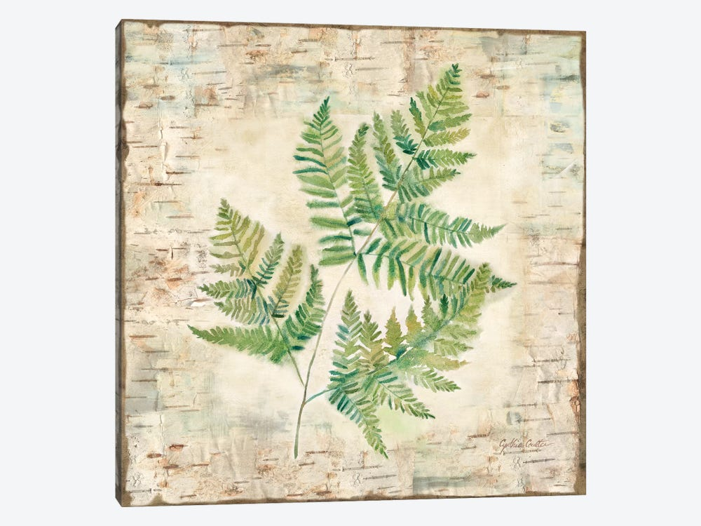 Birch Bark Ferns I by Cynthia Coulter 1-piece Canvas Print