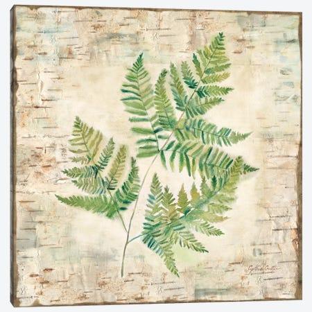 Birch Bark Ferns I Canvas Print #CYN3} by Cynthia Coulter Canvas Art