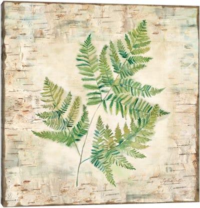 Birch Bark Ferns I Canvas Art Print