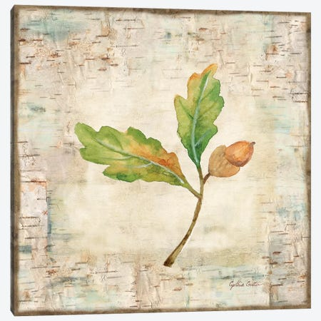 Nature Walk Leaves II Canvas Print #CYN48} by Cynthia Coulter Canvas Wall Art